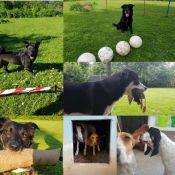Bild zu Die Hundeheim-Entdecker-Tour mit dem kleinen Hunde-Diplom